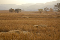 The fall of farmland. After harvest, the fall of farmland royalty free stock photography