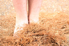 Fall Feet Royalty Free Stock Images