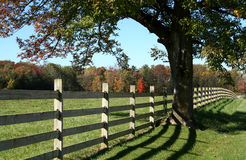 Fall Fence. Fenceline and Tree in Fall Stock Photos