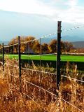 Fall fence. A fence with death around but yet the grass lives on Stock Image