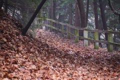Fall Fence Stock Photo