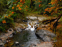 Fall At Fernview. Autumn view along the South Santiam River at Fernview Campground - near Upper Soda, OR stock image