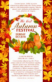 Fall festival poster of autumn vegetable and leaf. Fall festival poster template with autumn harvest vegetable and leaf. Orange pumpkin vegetable with frame of Royalty Free Stock Photography