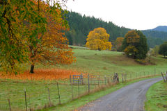 Fall in the Field Royalty Free Stock Images