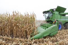 Fall field corn harvest Stock Image