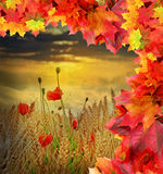 Fall field with poppies Royalty Free Stock Photos