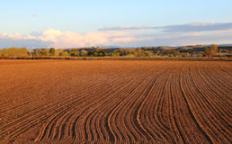 Fall Field Prep. A field prepped for sowing Stock Image