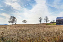Fall Fields. Trees stand stark amidst planted rows after harvest near Schoharie, New York Stock Images