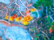 Fall Fir Tree Needles Royalty Free Stock Photo