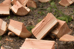 Fall firewood freshly split. Preparation for fall cutting firewood and splitting it. Freshly split wood ready for stacking Stock Images
