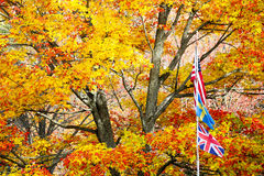 Fall Flags Stock Photos