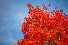 Free Fall Flames Reaching For The Sky Stock Photography - 160785102