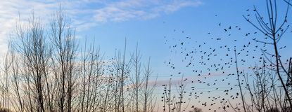 Fall - flock of birds migrating south Royalty Free Stock Photos