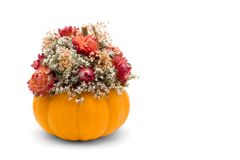 Fall Floral. A fall floral display of dried flowers and a pumpkin isolated on a white background Stock Image