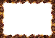 Fall Floral Border Stock Photography