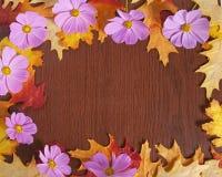 Fall Flower Frame Stock Photo