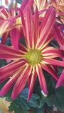 Fall Flower Power Royalty Free Stock Photos