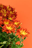 Fall Flowers Stock Images