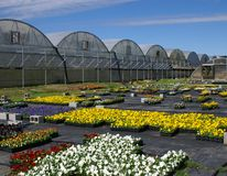 Fall Flowers and Greenhouses. Fall flowers in variety of colors outside several greenhouses Stock Photos