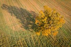 fall Flyg- landskap royaltyfria bilder