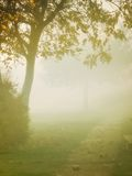Fall fog. Autumn fog came down on the park Royalty Free Stock Photos