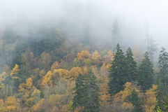 Fall and fog in the Great Smoky Mountains. Stock Photo