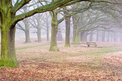 Fall foggy landscape of forest royalty free stock images