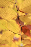 Fall Foilage Royalty Free Stock Images