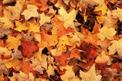 Fall Foilage Stock Photos