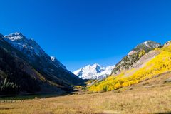 Fall Foilage Aspen Trees in the Colorado Maroon Bells Mountains. This is a photograph of a fall foilage in the aspen trees. The landscape is in Aspen Colorado stock photo