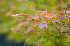 Fall foilage Royalty Free Stock Photography