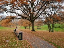 Autumn in the park, Aarhus University, Denmark. Fall folage and orange oak leaves on the ground - a scenic view in autumn in Denmark royalty free stock photography