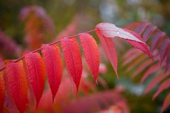Fall Foliage. In New England Stock Photography