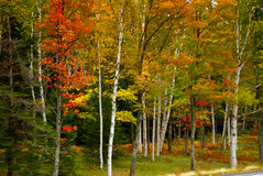 Fall foliage. In the green mountains of Vermont, USA Stock Photo