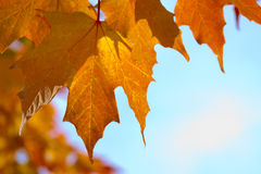 Fall Foliage Stock Photo