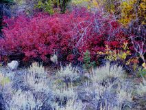Fall foliage. Autumn in Colorado Royalty Free Stock Photos
