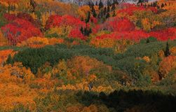 Fall foliage. Colorado fall colors close to Telluride Stock Images