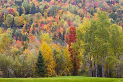 Fall Foliage. Colorful foliage in the Burke Mountains royalty free stock photo
