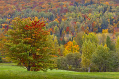 Fall Foliage. Colorful foliage in the Burke Mountains Royalty Free Stock Photography