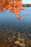 Fall foliage. Colors over a lake Royalty Free Stock Photos