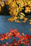 Fall foliage Stock Image