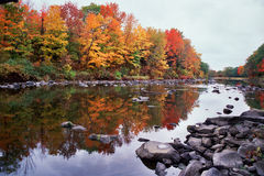Fall foliage. Pretty fall trees reflected in a smooth river Stock Images