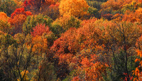 Free Fall Foliage Royalty Free Stock Image - 77308296
