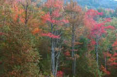 Fall Foliage, Acadia Royalty Free Stock Photo