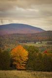 Fall Foliage in The Adirondacks of Northern New York. October 2016 Fall Foliage in the Adirondacks of Northern New York.  Bright yellow and Orange single tree Royalty Free Stock Photo