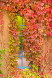 Fall Foliage Adorning a New Mexico Window Royalty Free Stock Photos