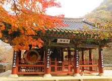 Fall Foliage Against Beautiful Old Belfry, Buddhism Temple in South Korea Stock Photography