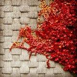 Fall foliage against grey shingles Royalty Free Stock Photos