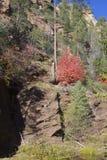 Fall Foliage Along Oak Creek Stock Photo