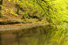 Fall foliage along river banks. River banks through forest with fall foliage on sunny day Stock Photography